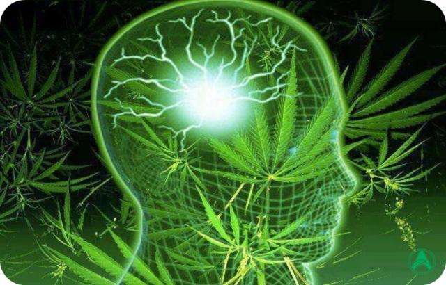 Resultado de imagem para analgesico canabidiol