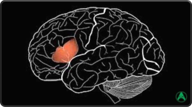 cerebro-area-broca
