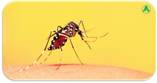 febre-amarela-mosquito