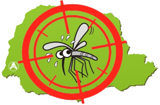 parana-dengue