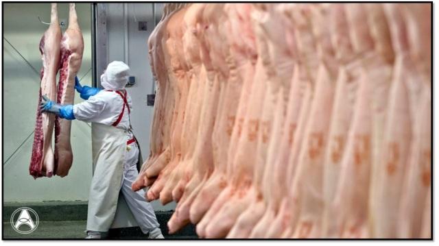 carne acido ascorbico