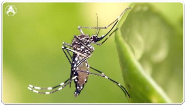 fiocruz dengue