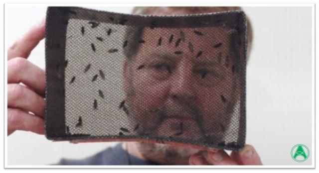 Tecnologia Aedes aegypti