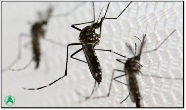 zika dengue 2