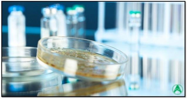 bactérias antibióticos