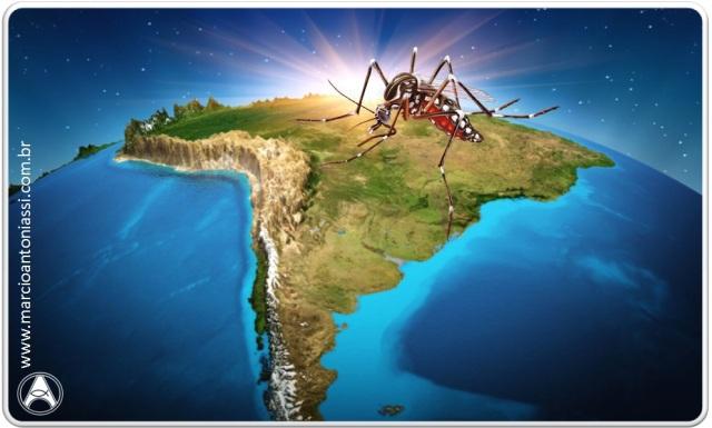 brasil mosquito
