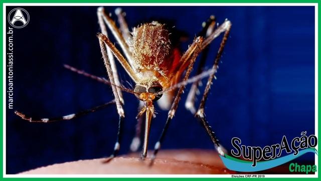 doenças mosquitos